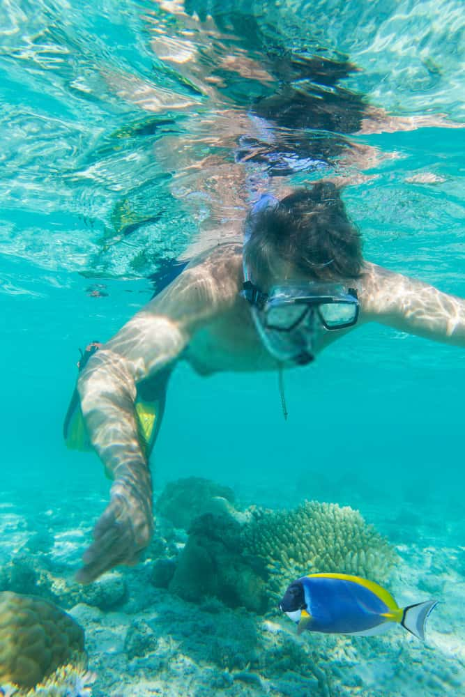 Florida Dolphin And Snorkeling Tour