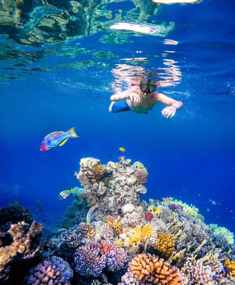 Skull Island And Panama Beach Dolphin Tour