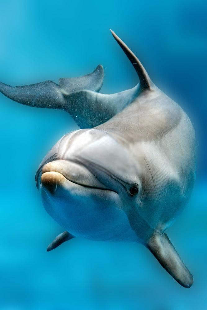 Dolphin Monitoring